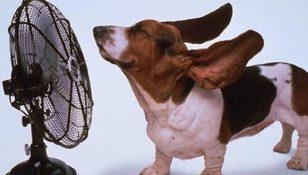 caldo afoso
