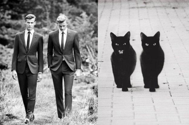 uomo e gatto 8